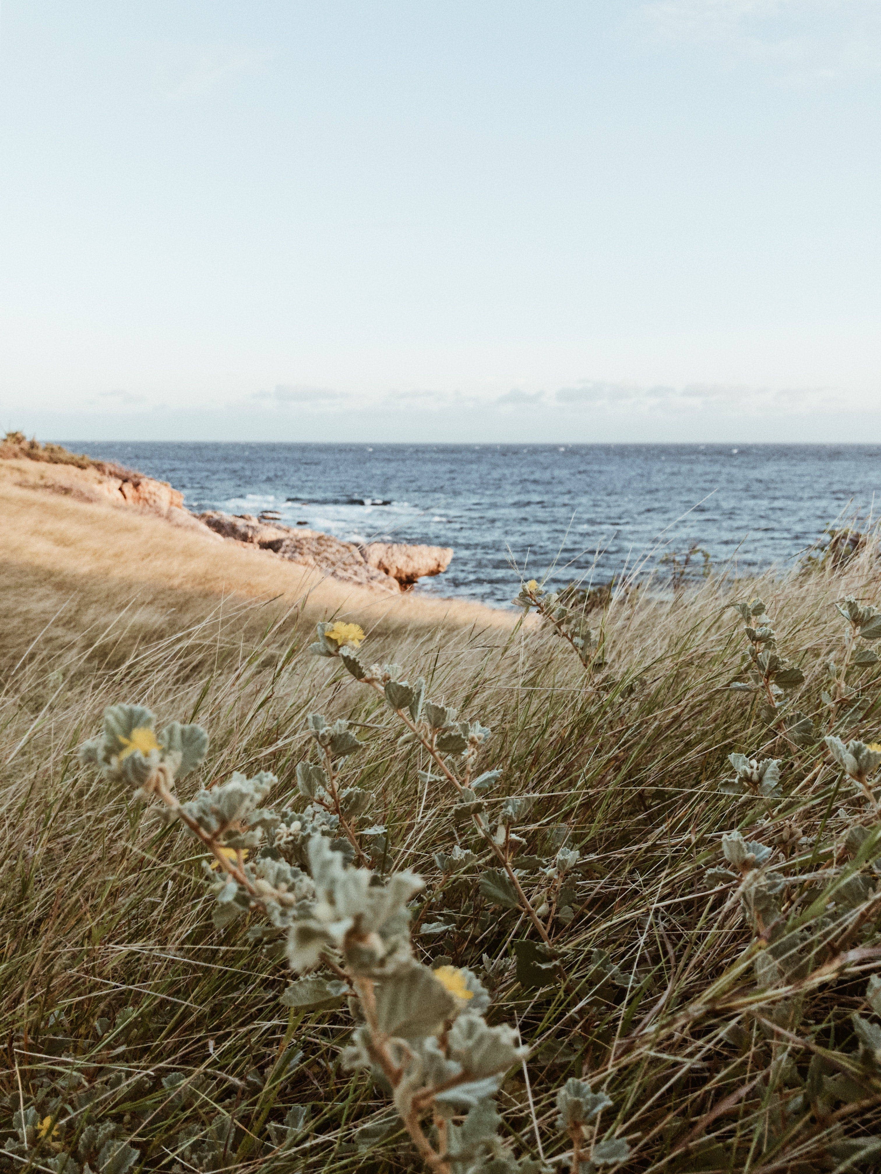 gray grasses at beach during daytime