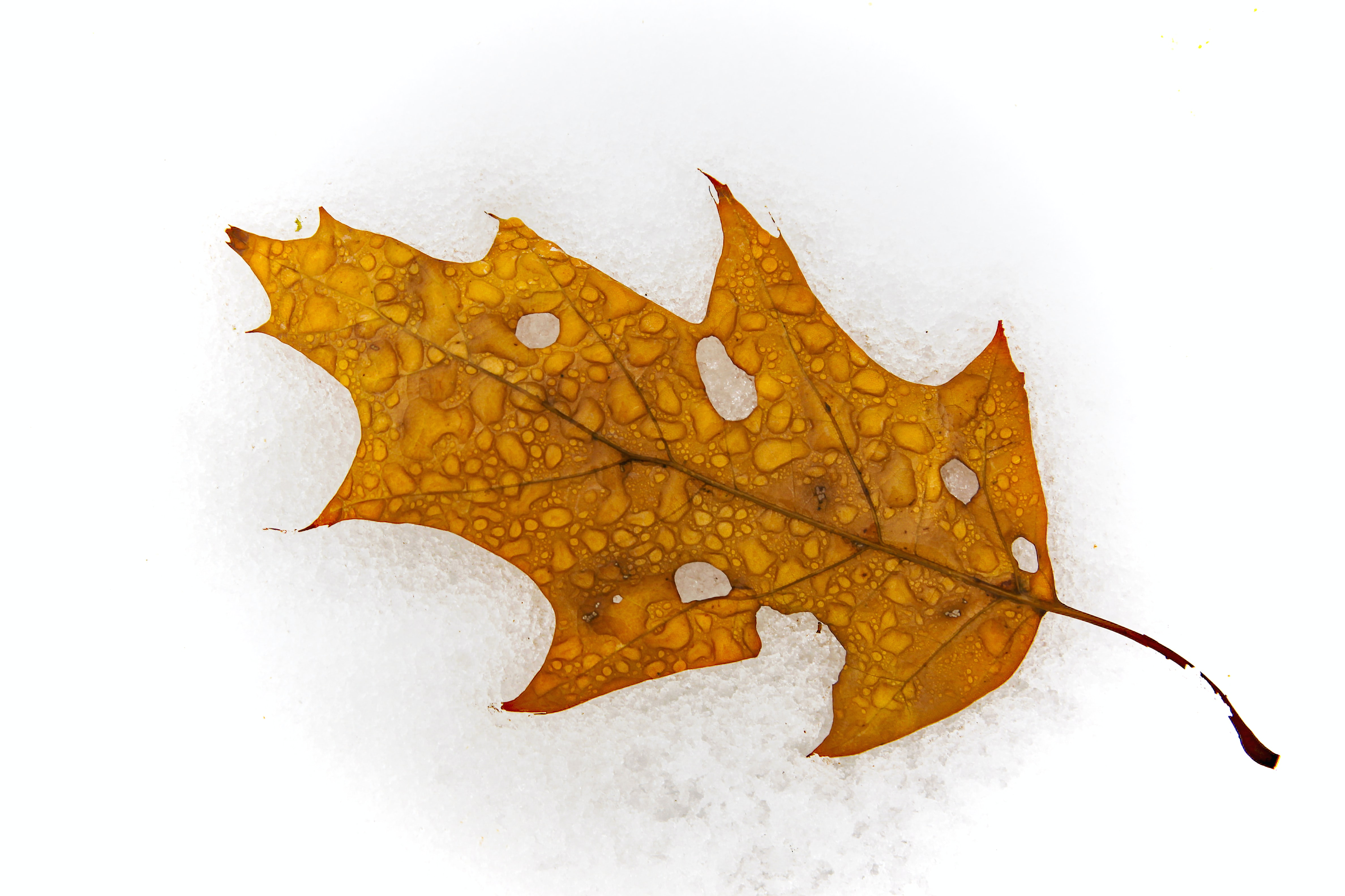 top view of leaf with water droplets