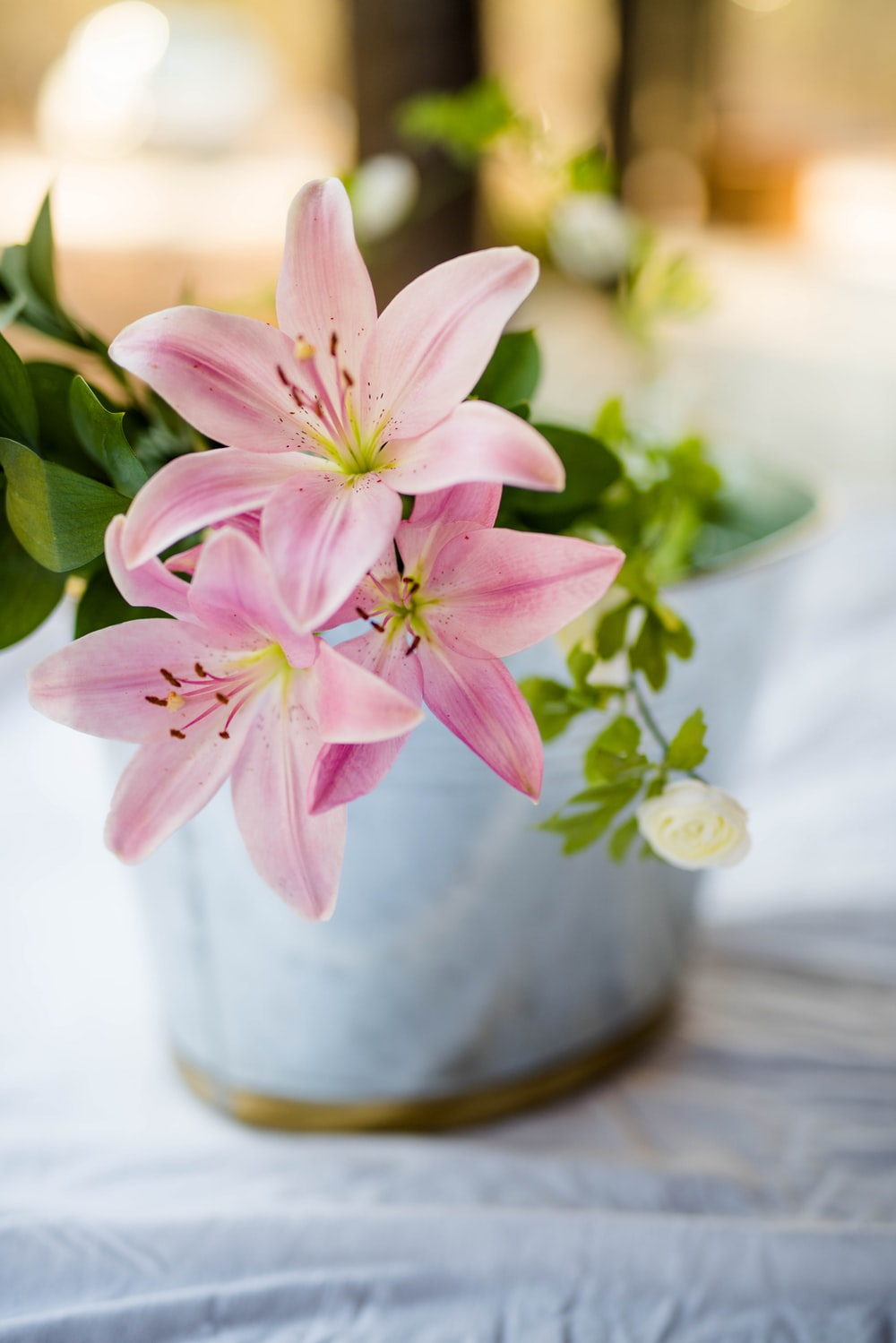 pink flower plant in white pot