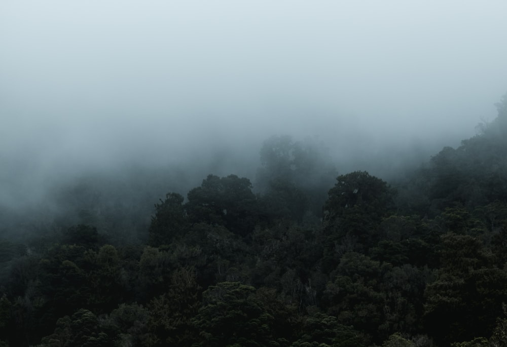 photo fog covered forest