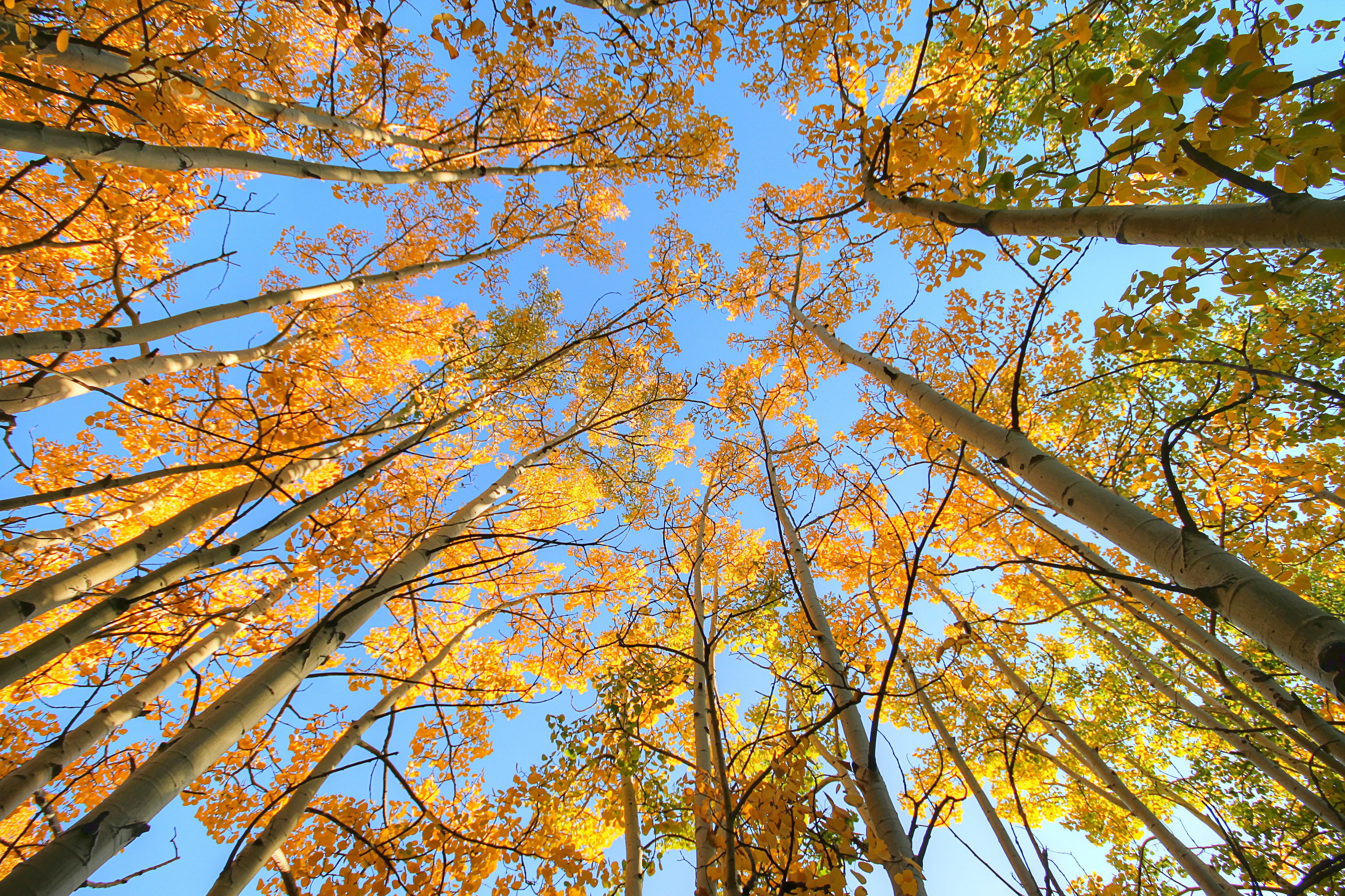 worm's eyeview of brown trees