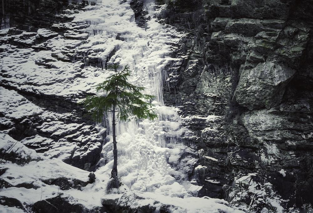 green tree beside gray rock mountain