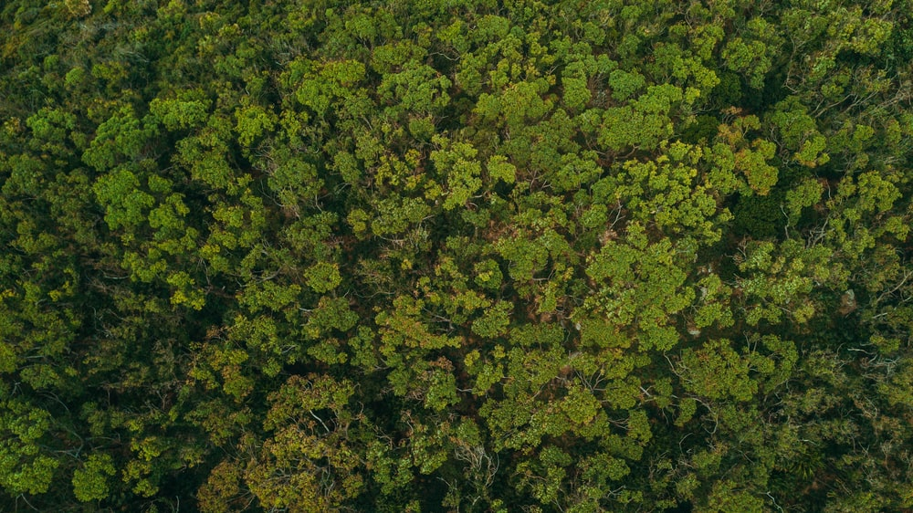 aerial photography of green trees during daytime