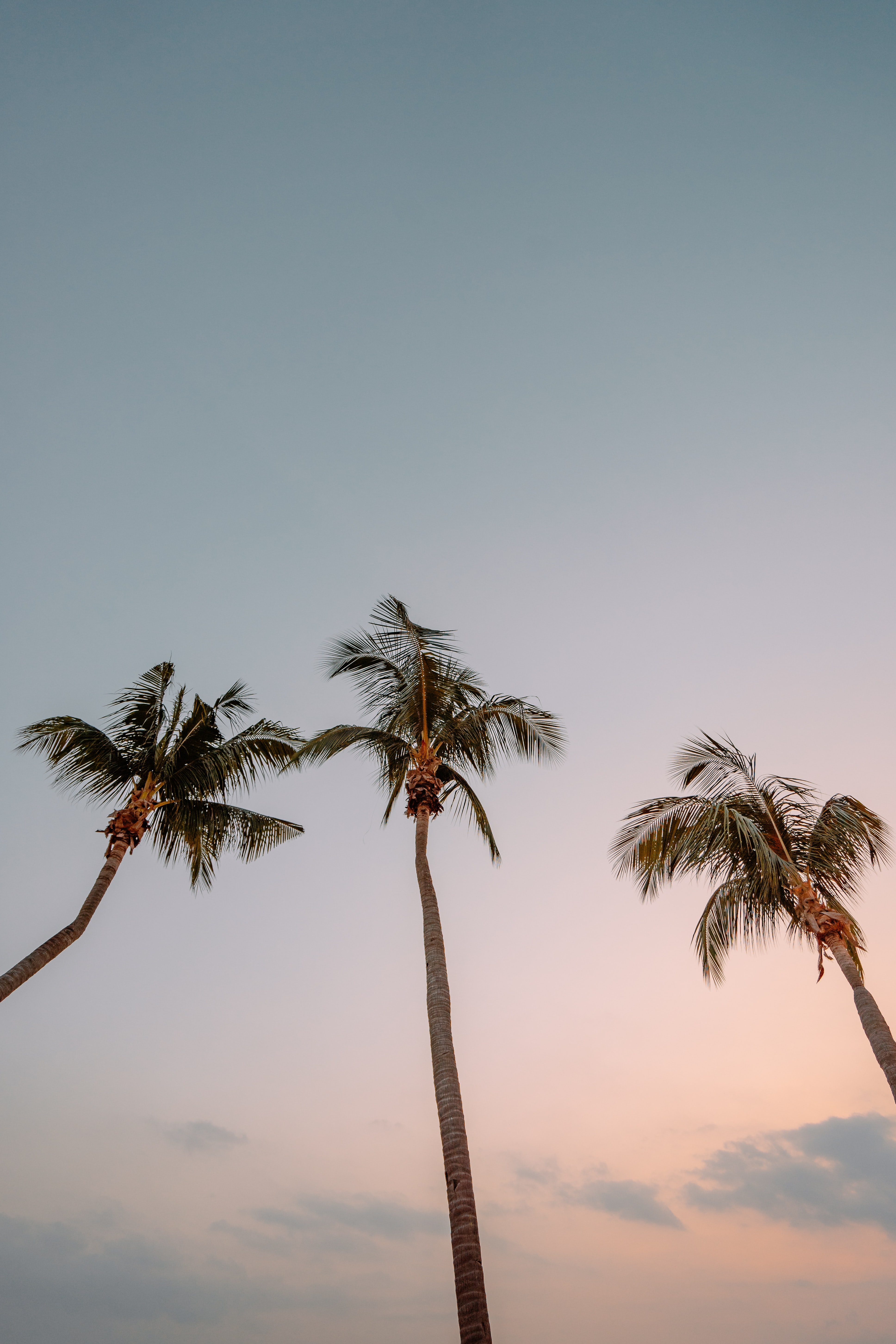 low angle photography of three coconut trees