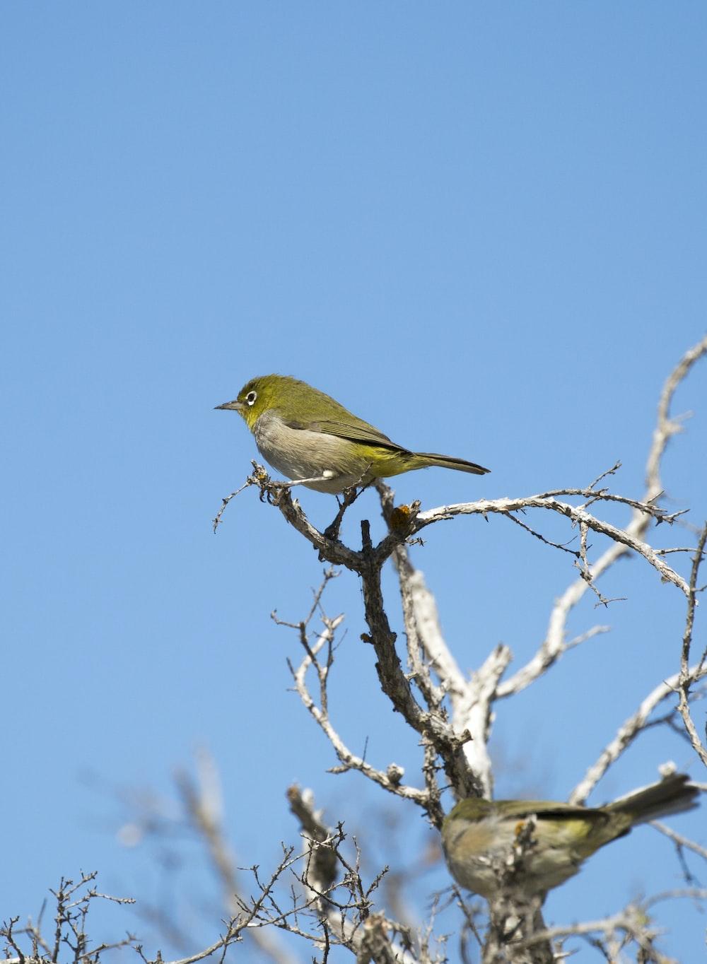 Green Bird Photo Free Bird Image On Unsplash