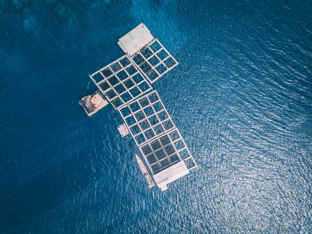 aerial photography of body of water during daytime