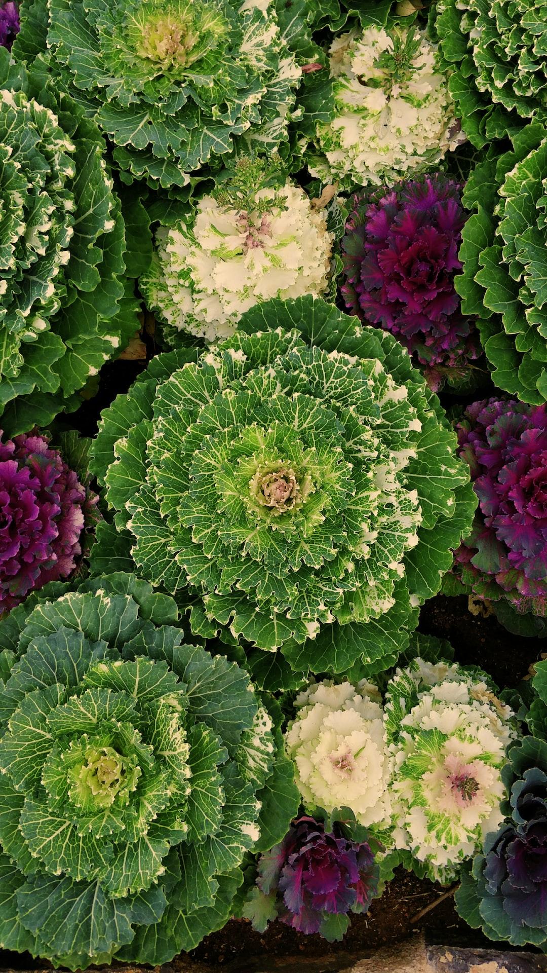 Cauli-flowers