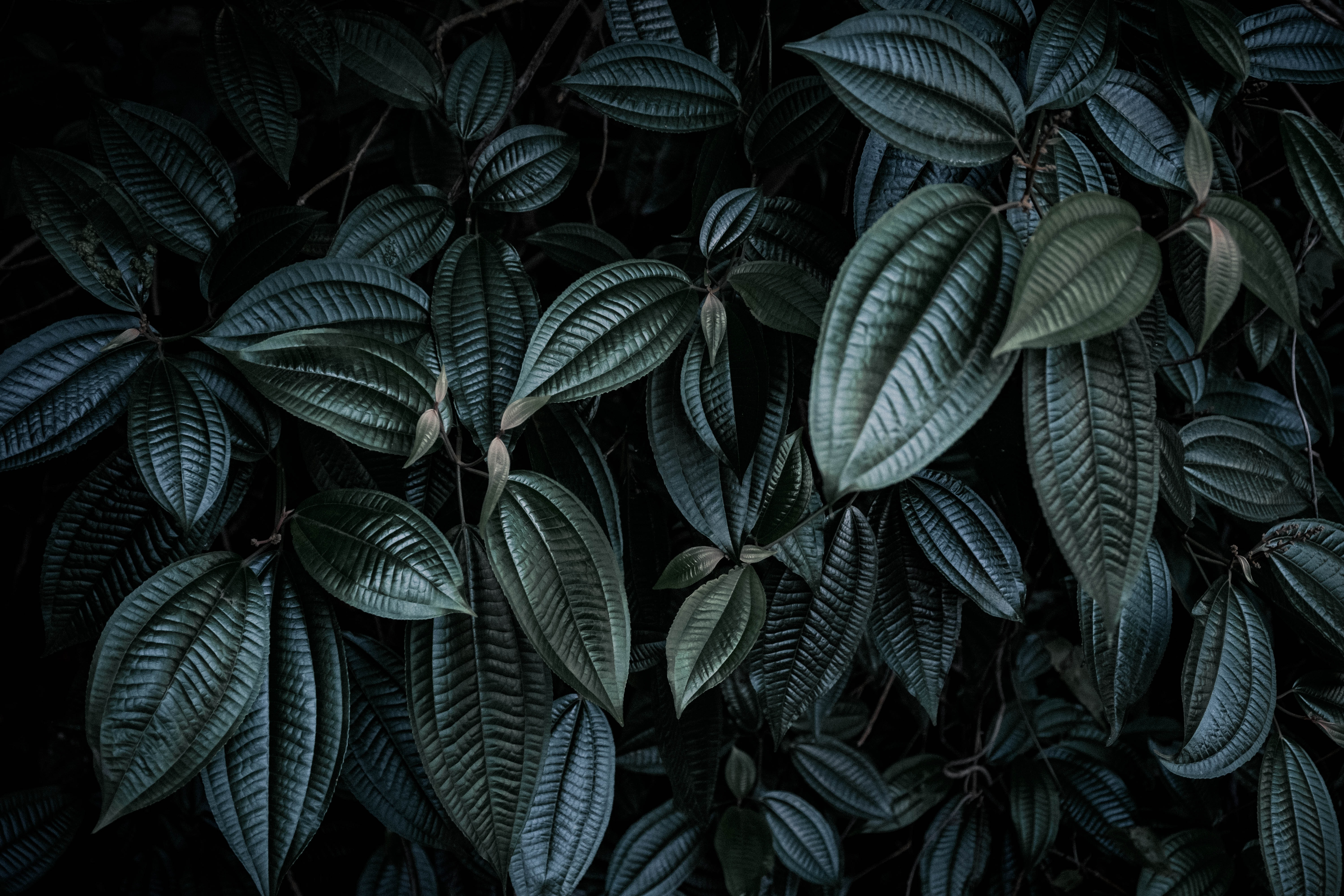 low light photography of green leafed plant