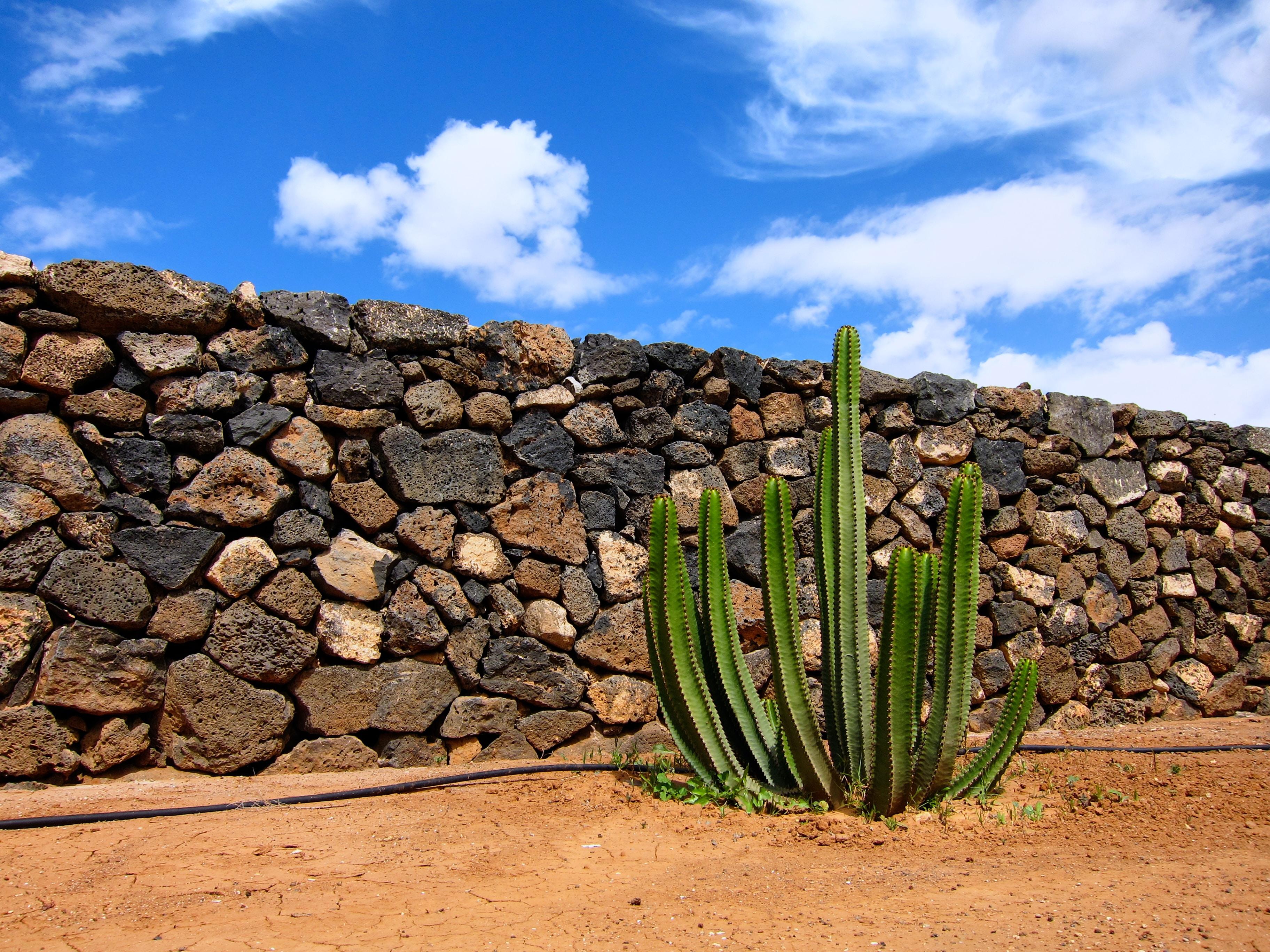 green cactus plant near brick wall