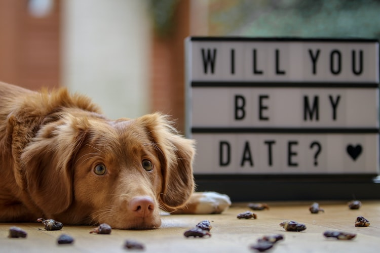 "A brown dog lying on the ground next to a sign that says ""will you be my date?"""