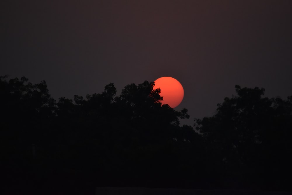 silhouette of trees with red moon