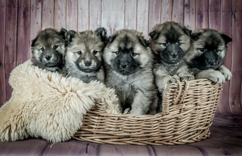 puppies_in_basket