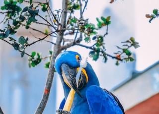 blue macaw holding toothbrush during daytime