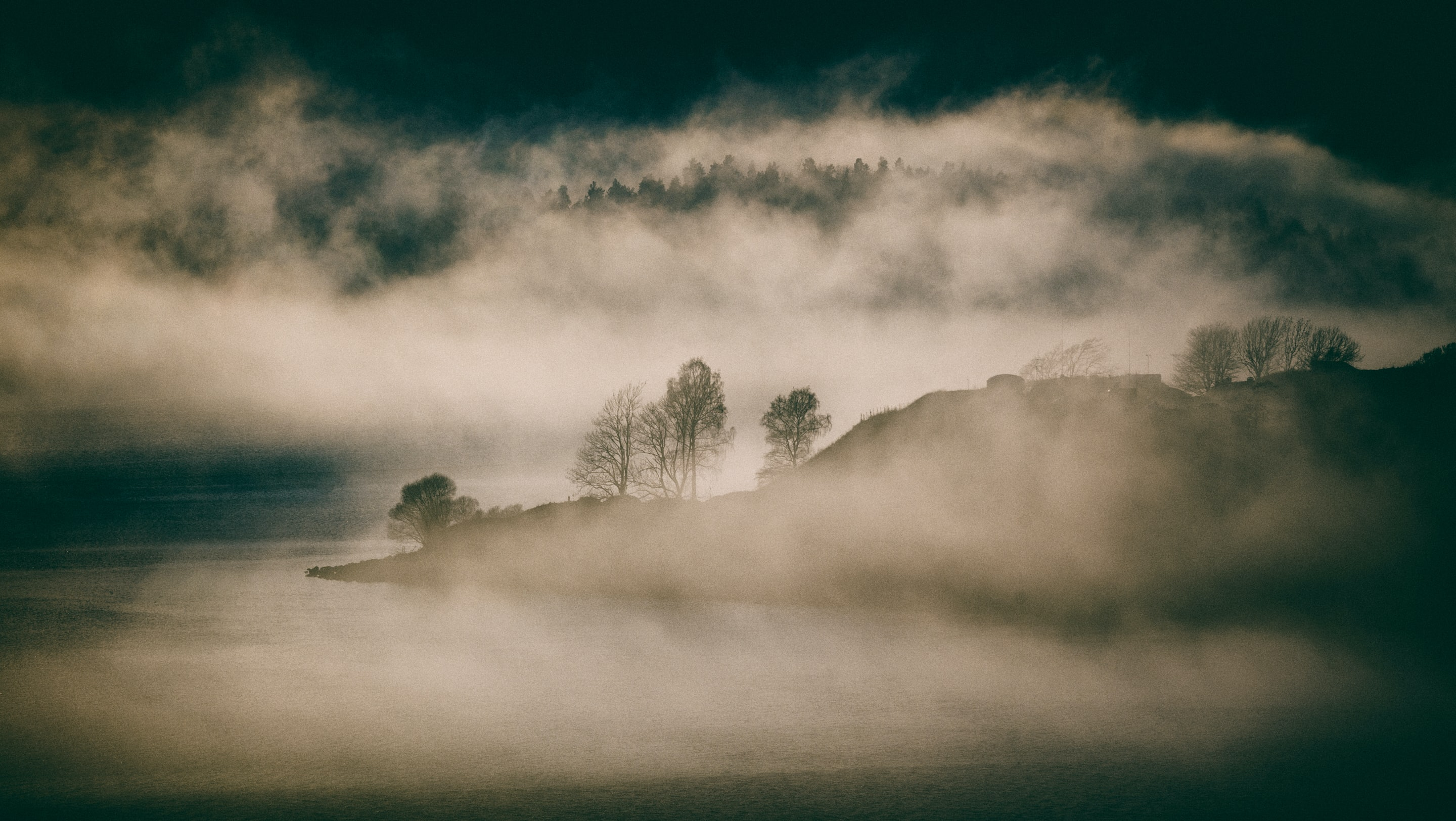bare trees covered in fog