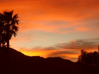 silhouette of palm tree during orange sunset