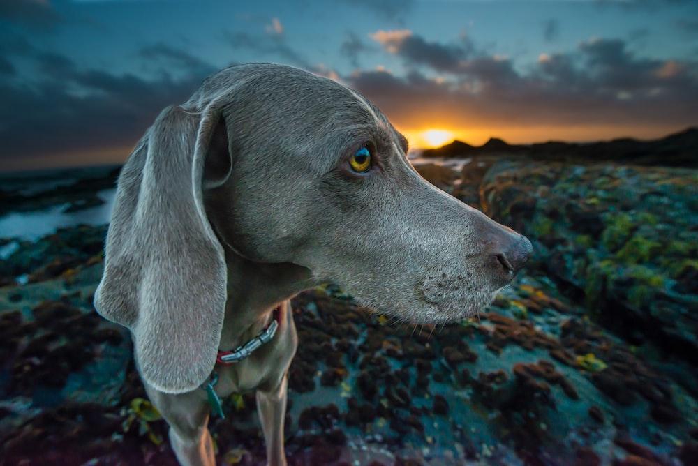 macro shot of gray dog