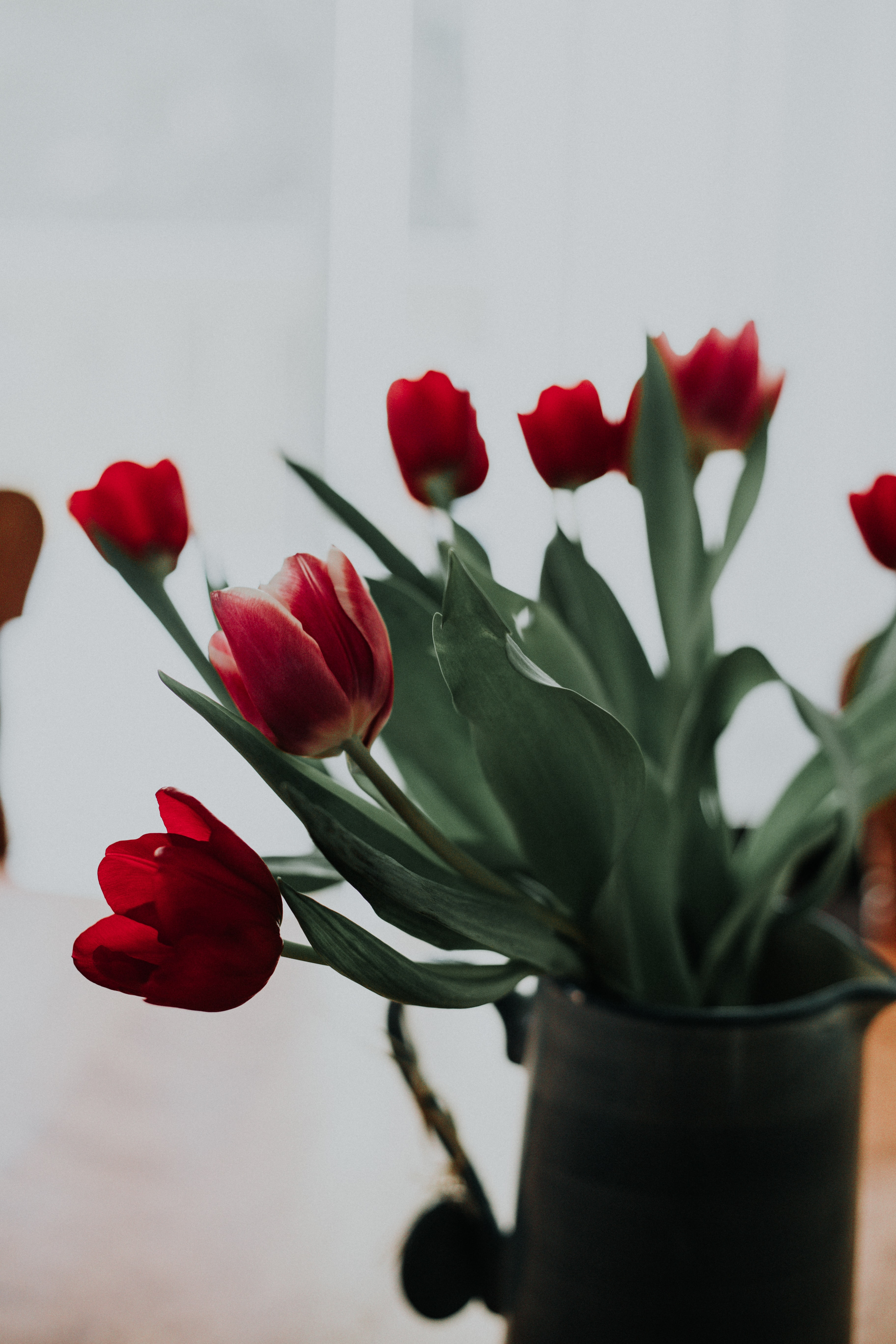 macro shot photography of red tulips