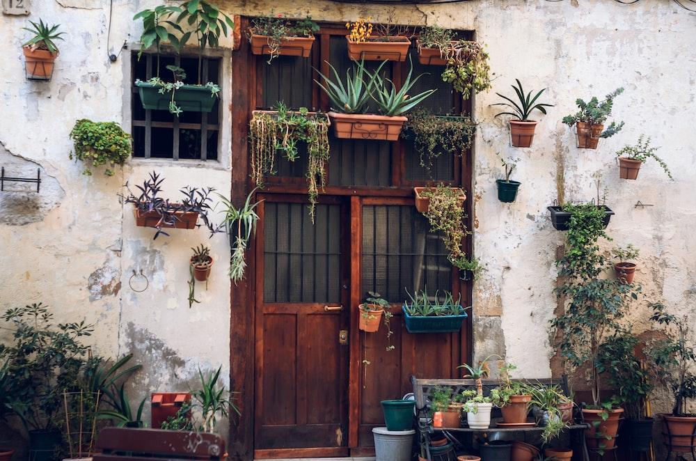 brown doors with plants