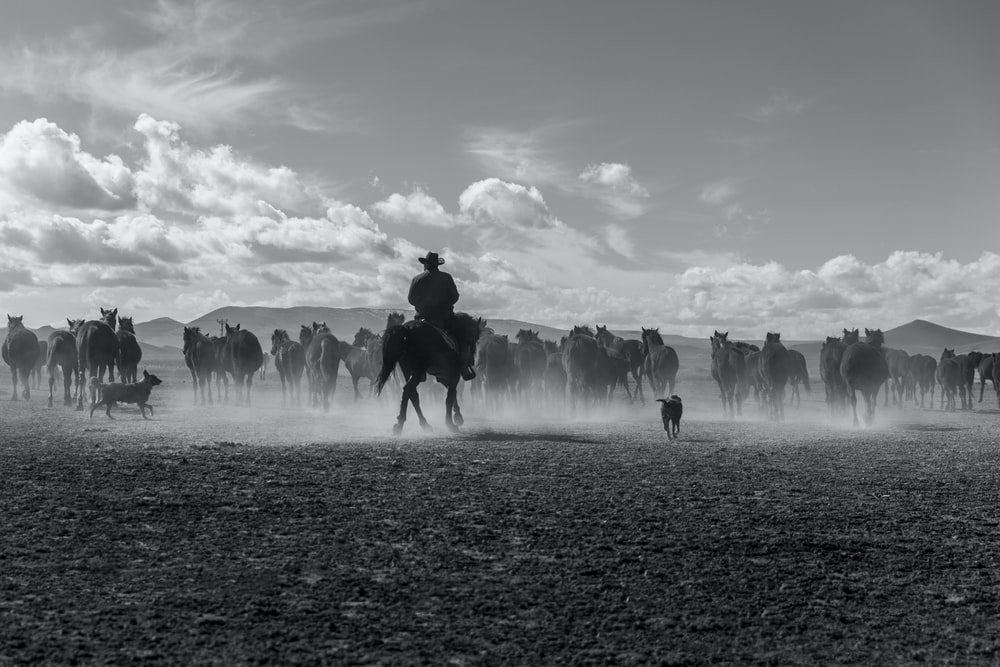 grayscale photo of man riding horse