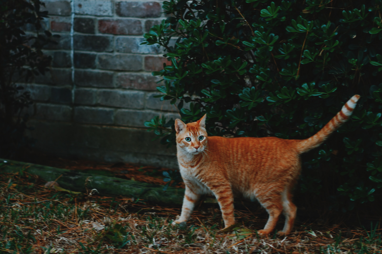 photo of orange tabby cat near plant