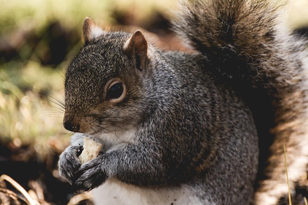 squirrel holding nut during daytime