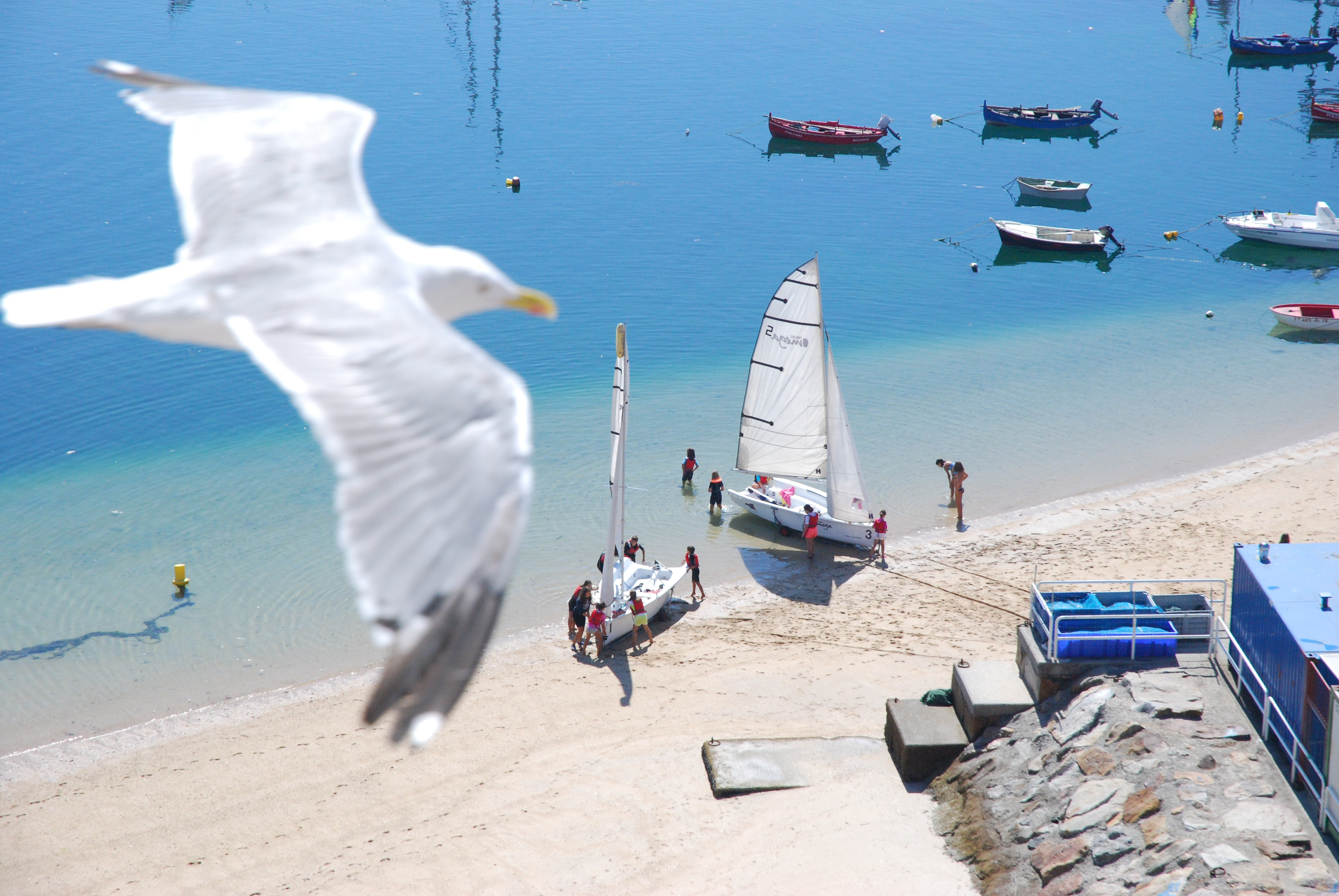 white bird flying and people standing near boat docked on seashore