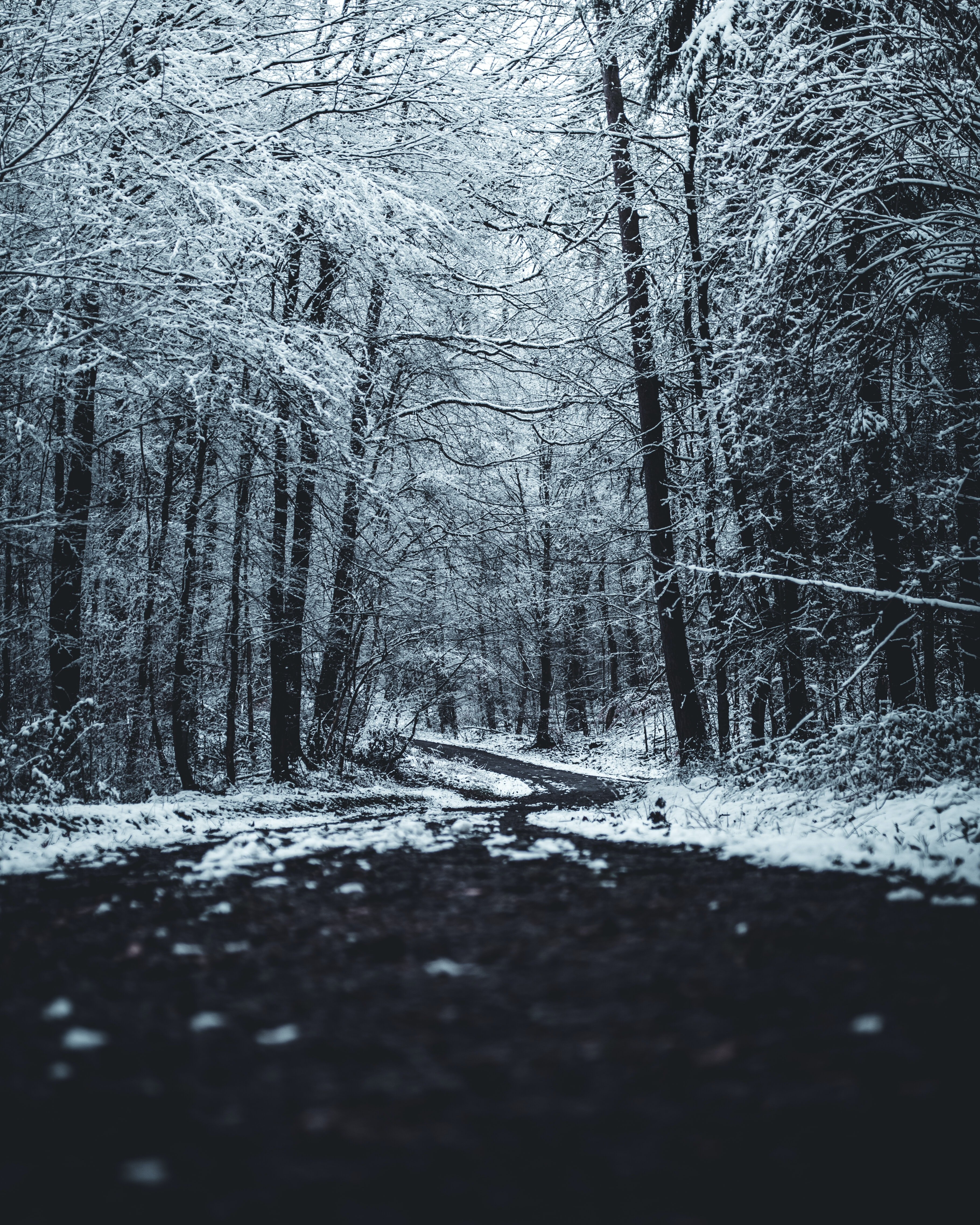 black pathway between bare trees covered with snow at daytime
