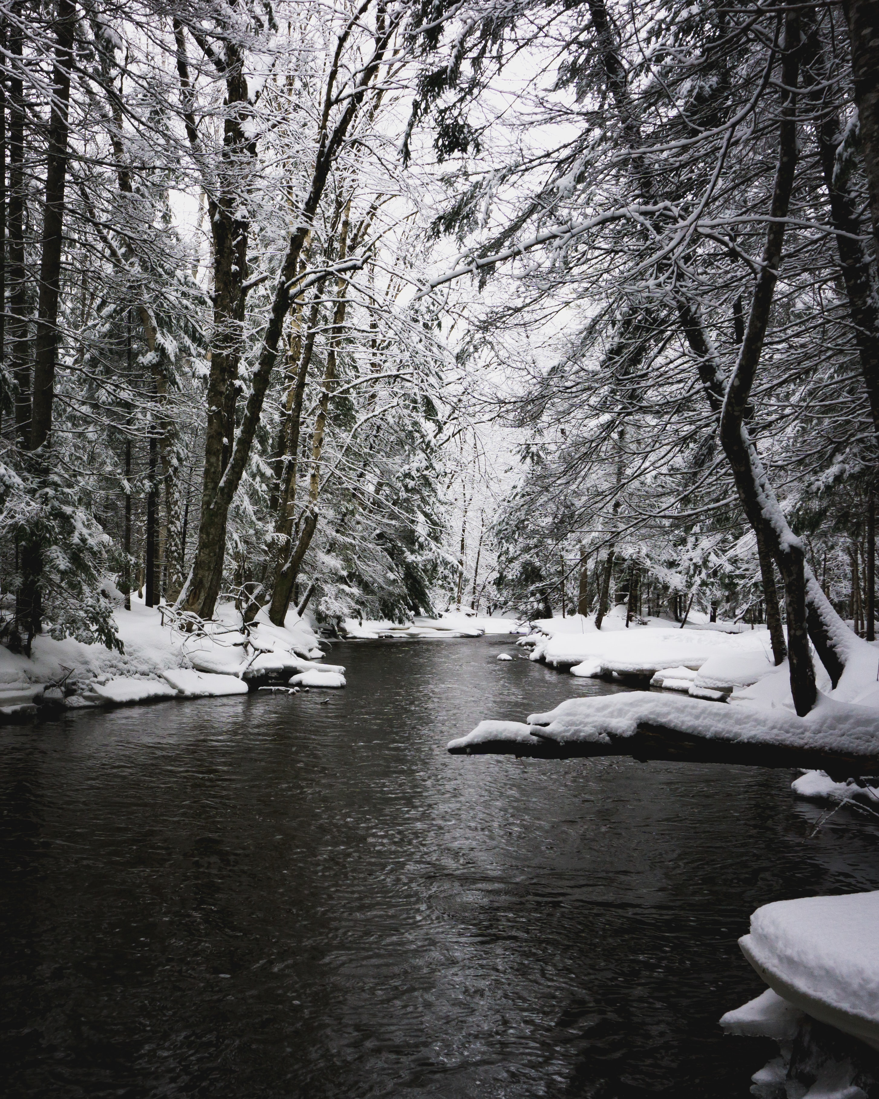 greyscale photography of river in between snow ground under shade of trees at daytime