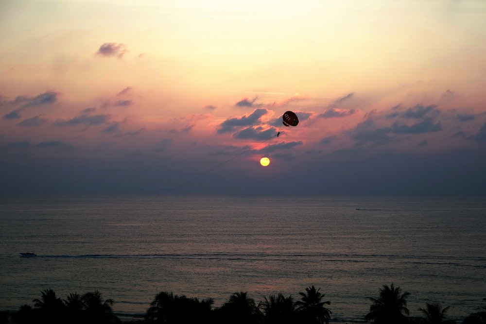 silhouette of trees and parachute near seashore during golden hours