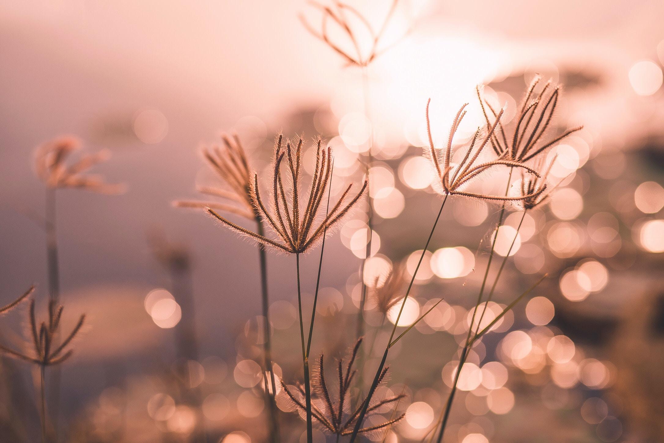 grass in shallow focus lens