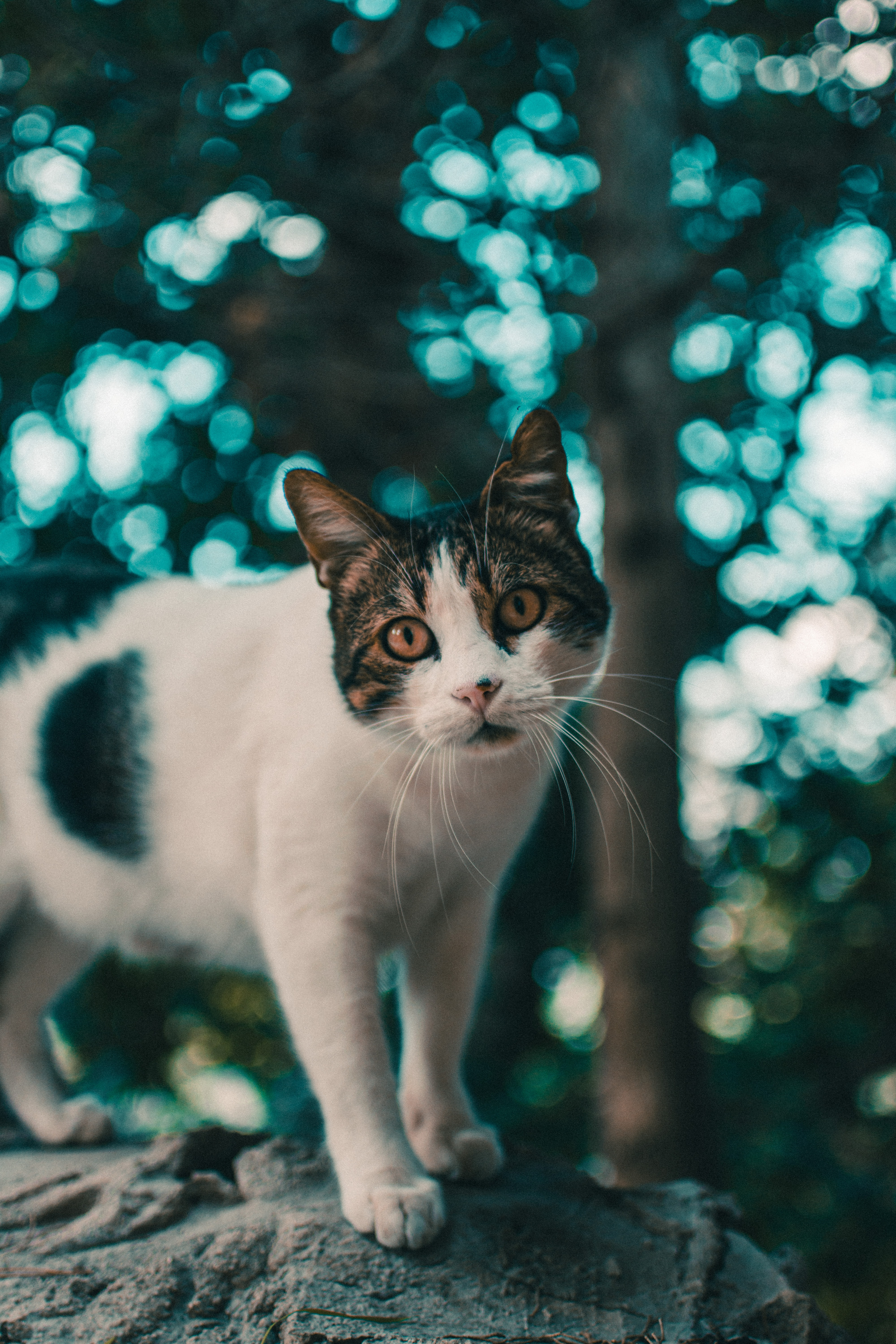selective focus photography of white and black cat standing on cliff during daytime