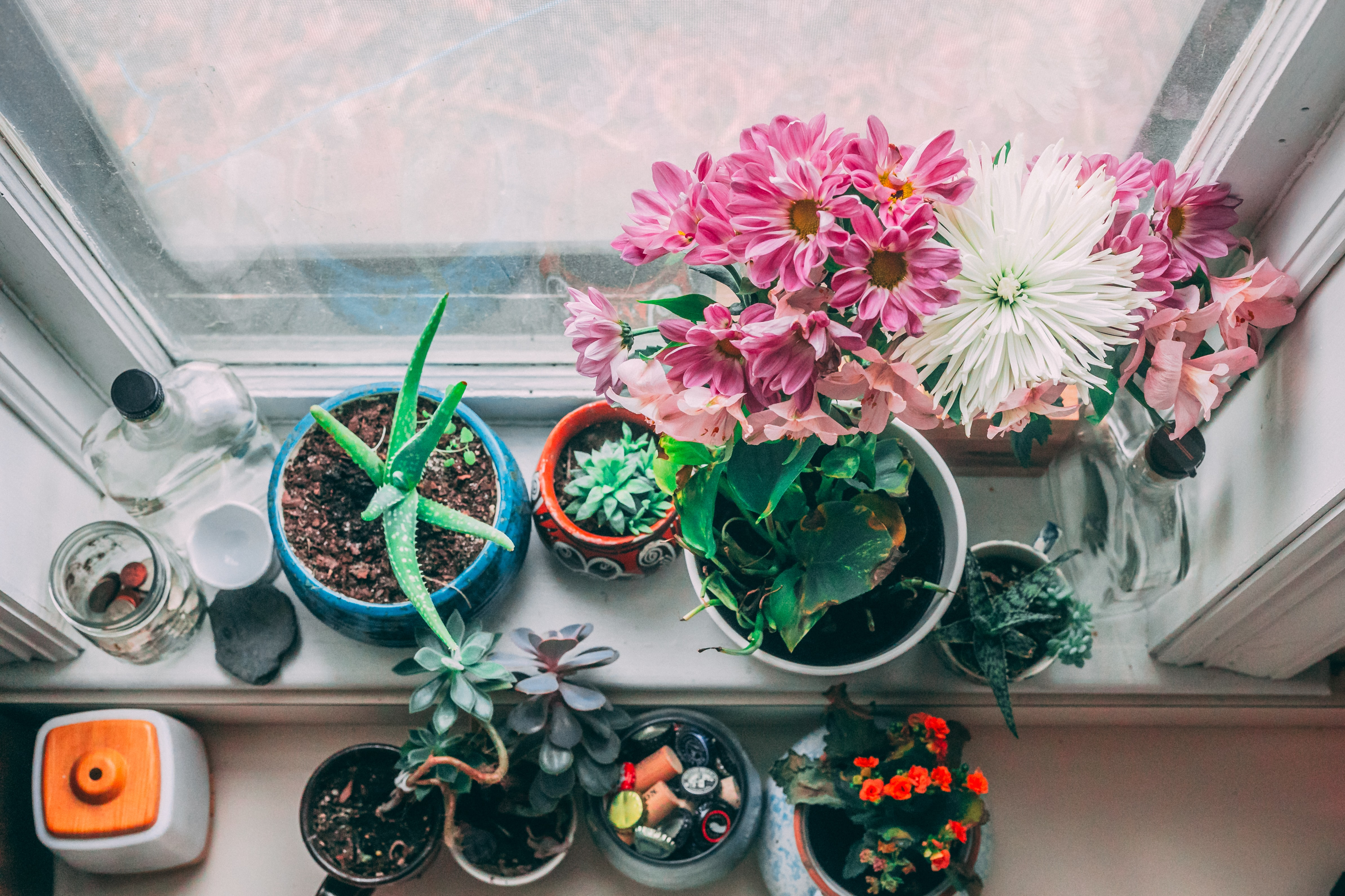 assorted-color petaled flowers near white wooden window