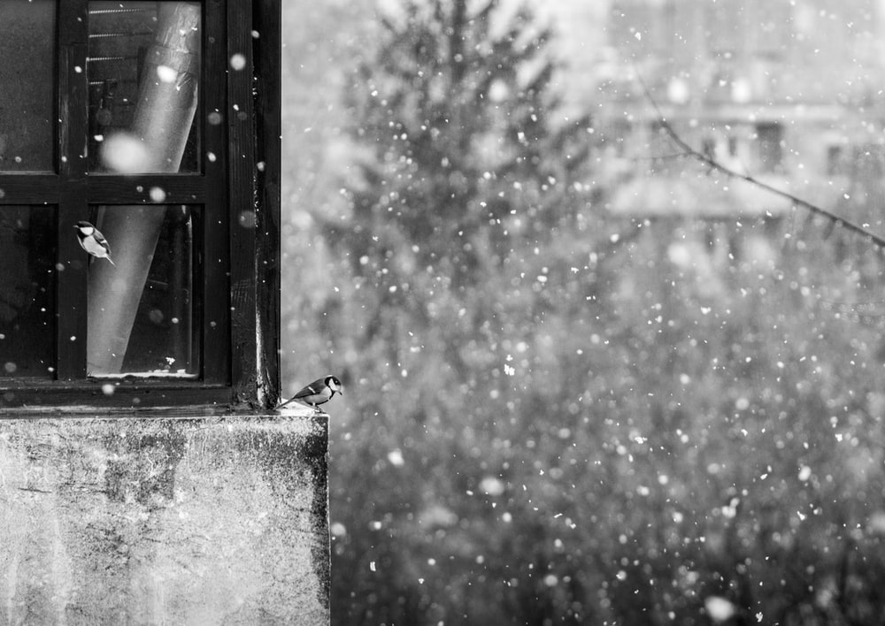 grayscale photography of bird near window