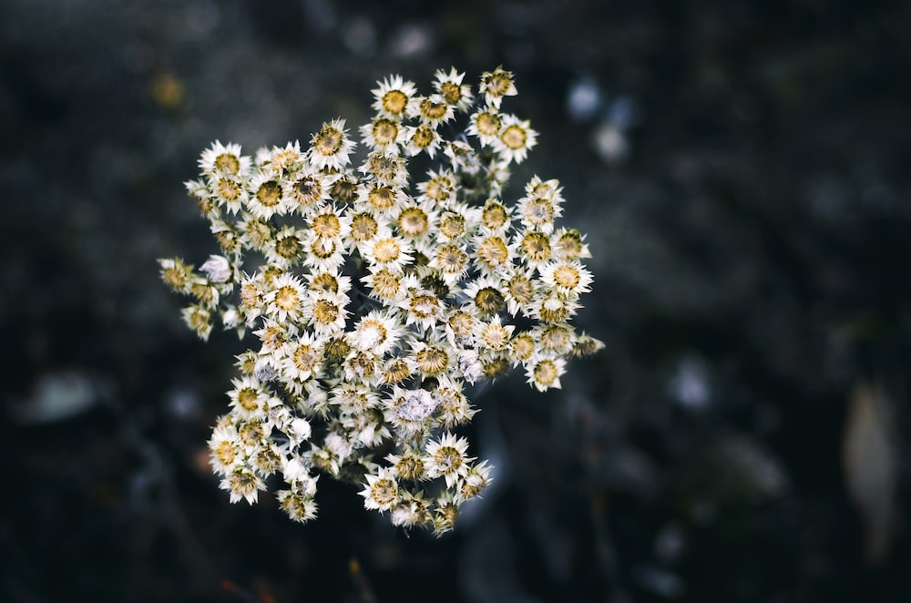 white and yellow petaled flower in selective focus photography