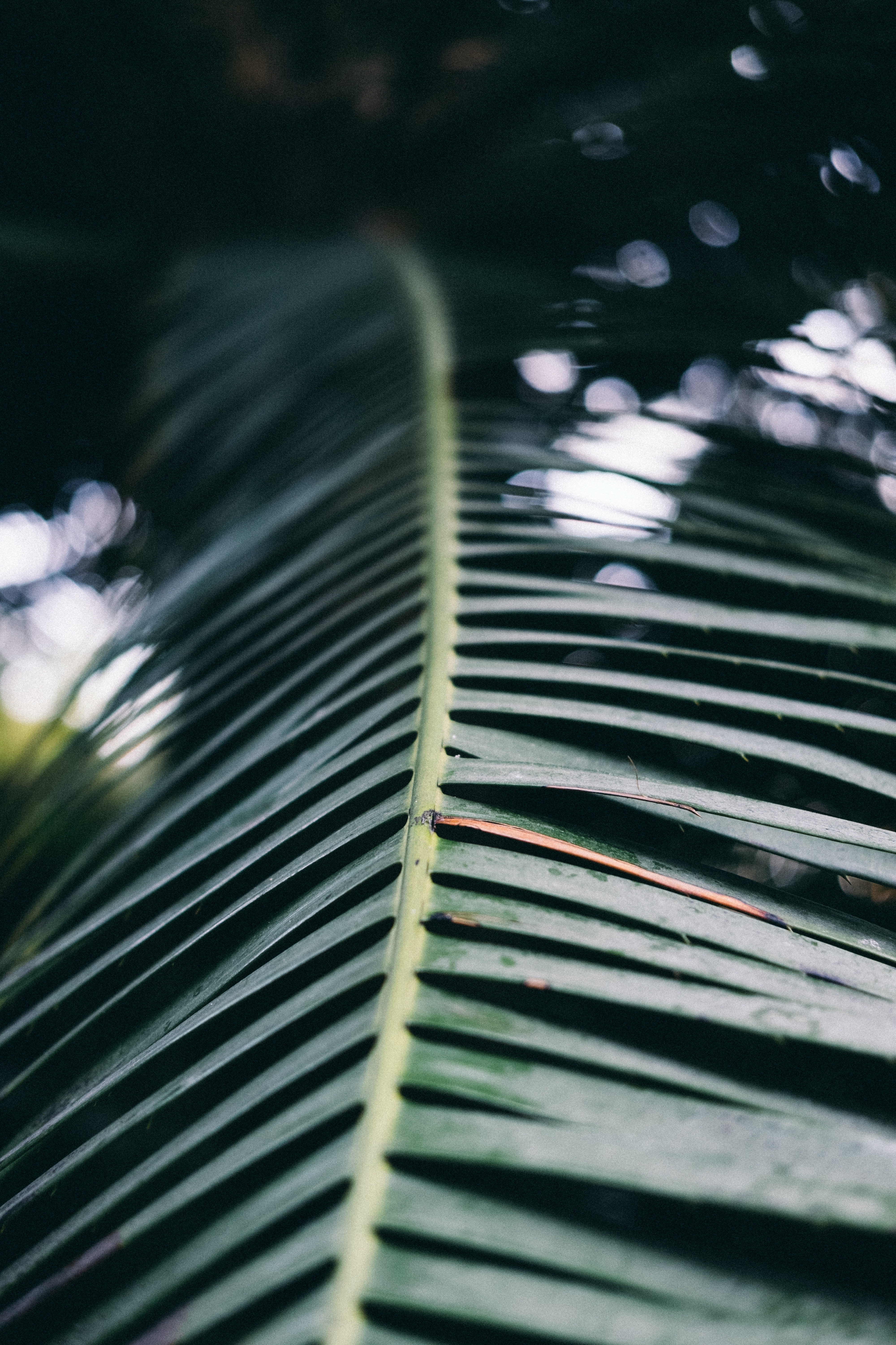shallow focus photography of green leaf
