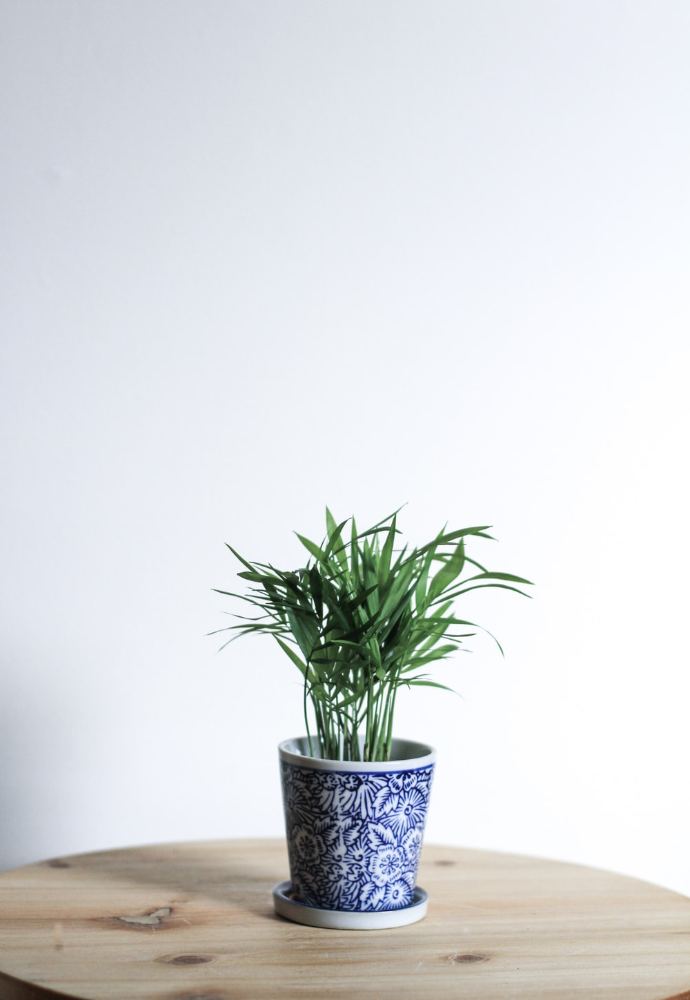 green plant in white and blue ceramic pot