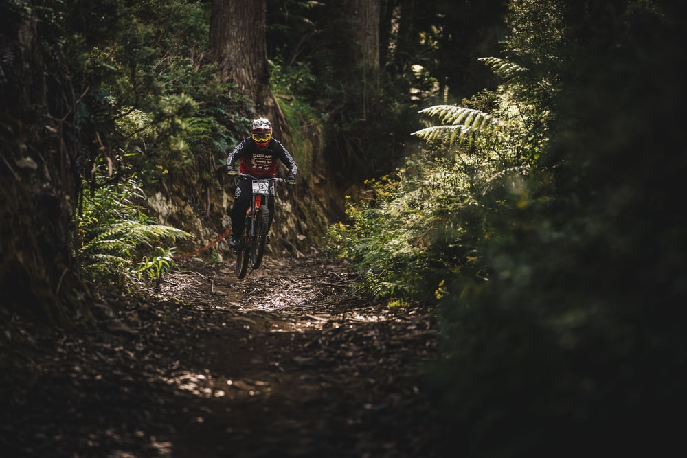 man riding bicycle going to the forest during daytime