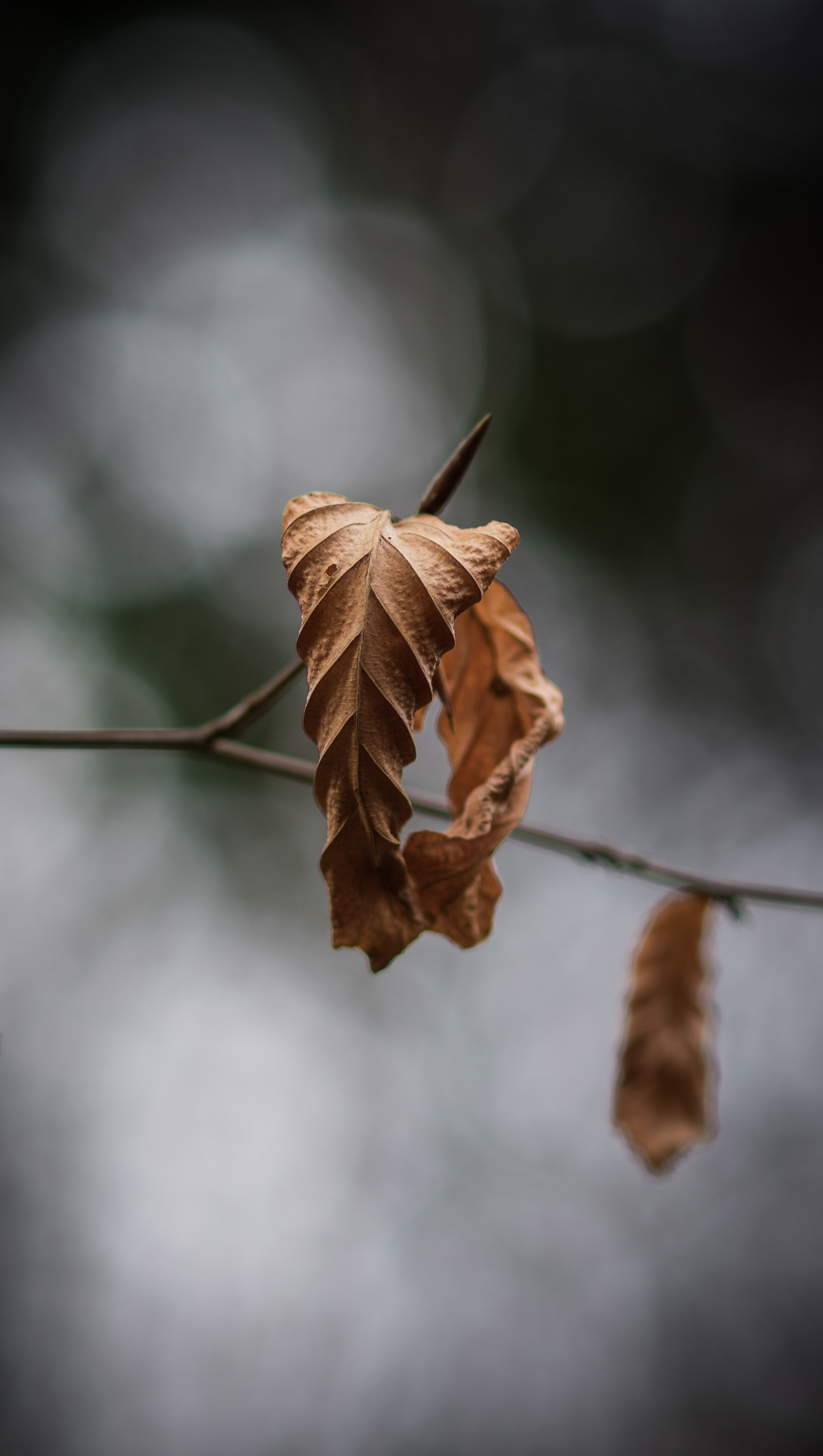 closeup photography of dried leaf