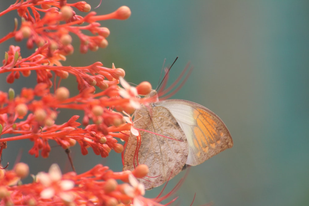 close-up photography of gray and orange butterfly perching on red petaled flower during daytime