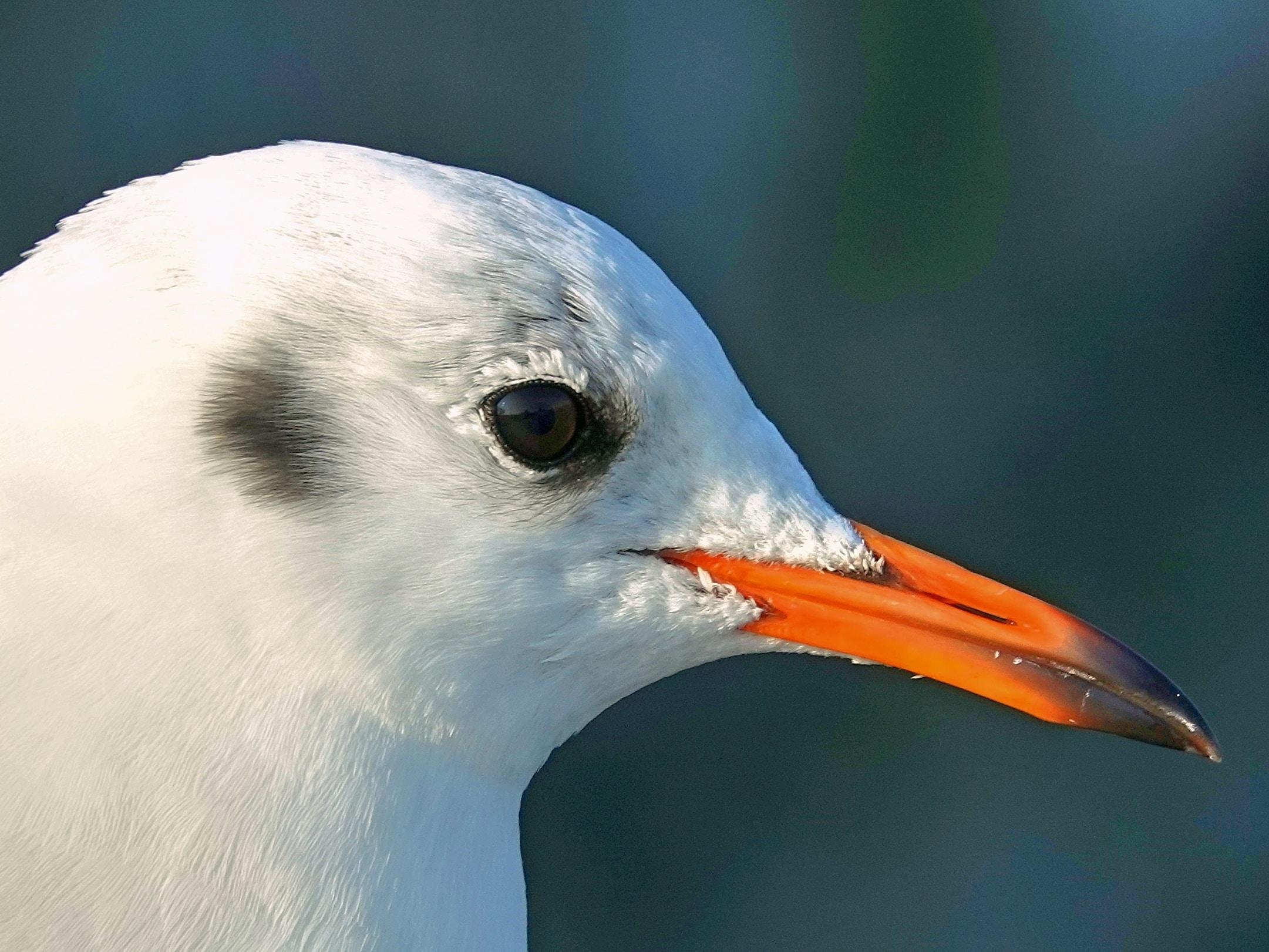 shallow focus photo of white bird