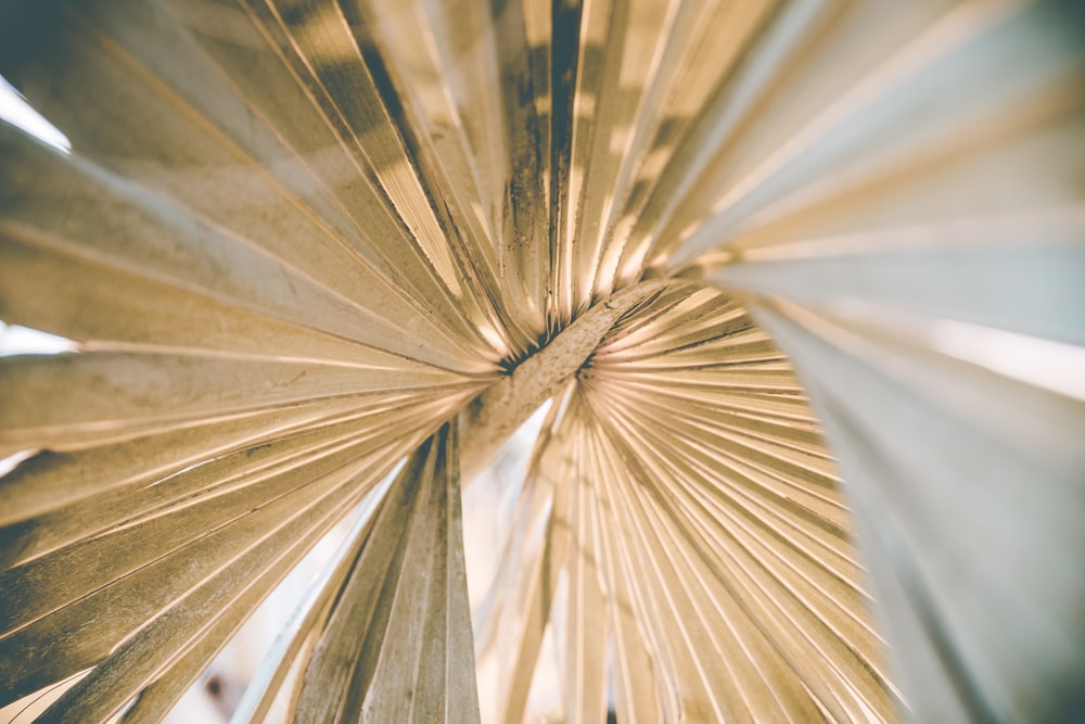 closed up photography of leaf