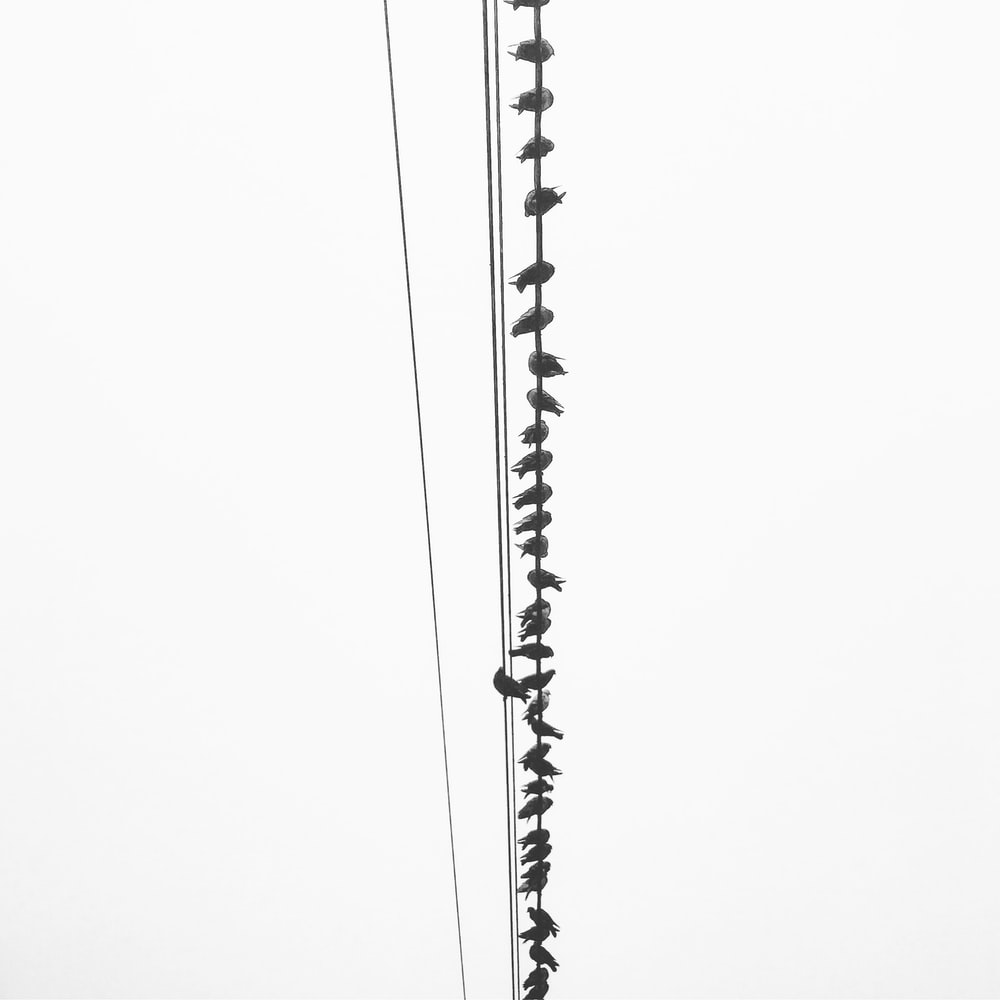birds perching on utility wires