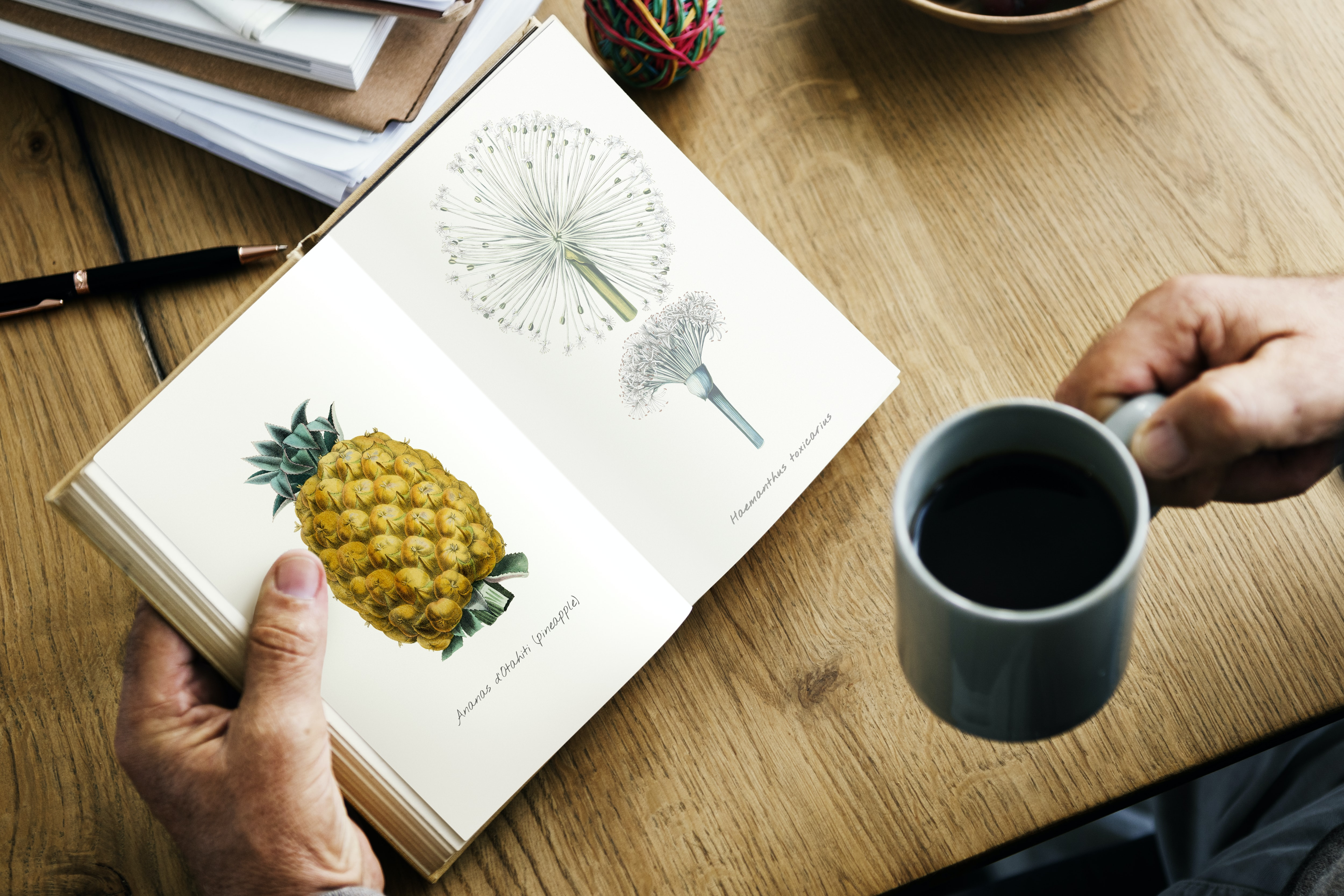 person holding teal mug reading book