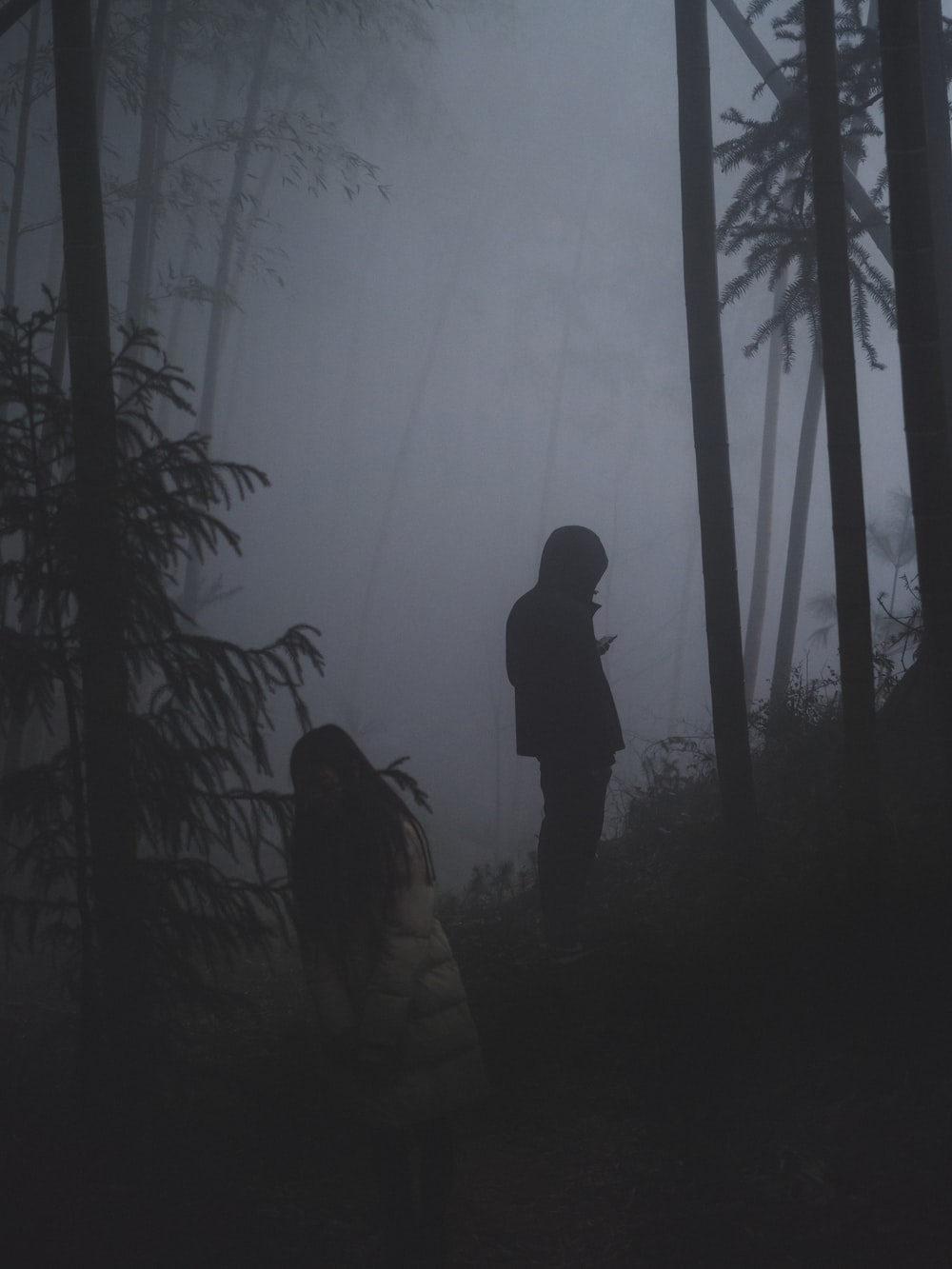 two persons in forest with thick fog