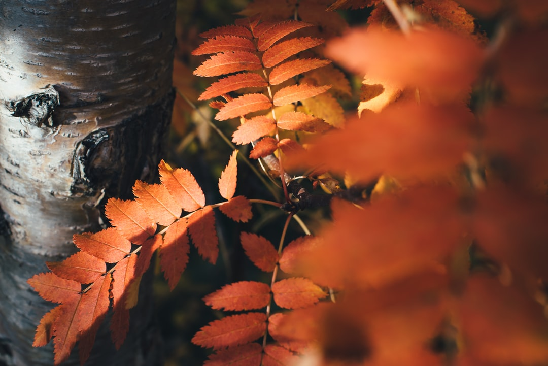 Edited with Vintage Autumn Colors – FREE Lightroom Presets by Presetbase. → Download on www.presetbase.com
