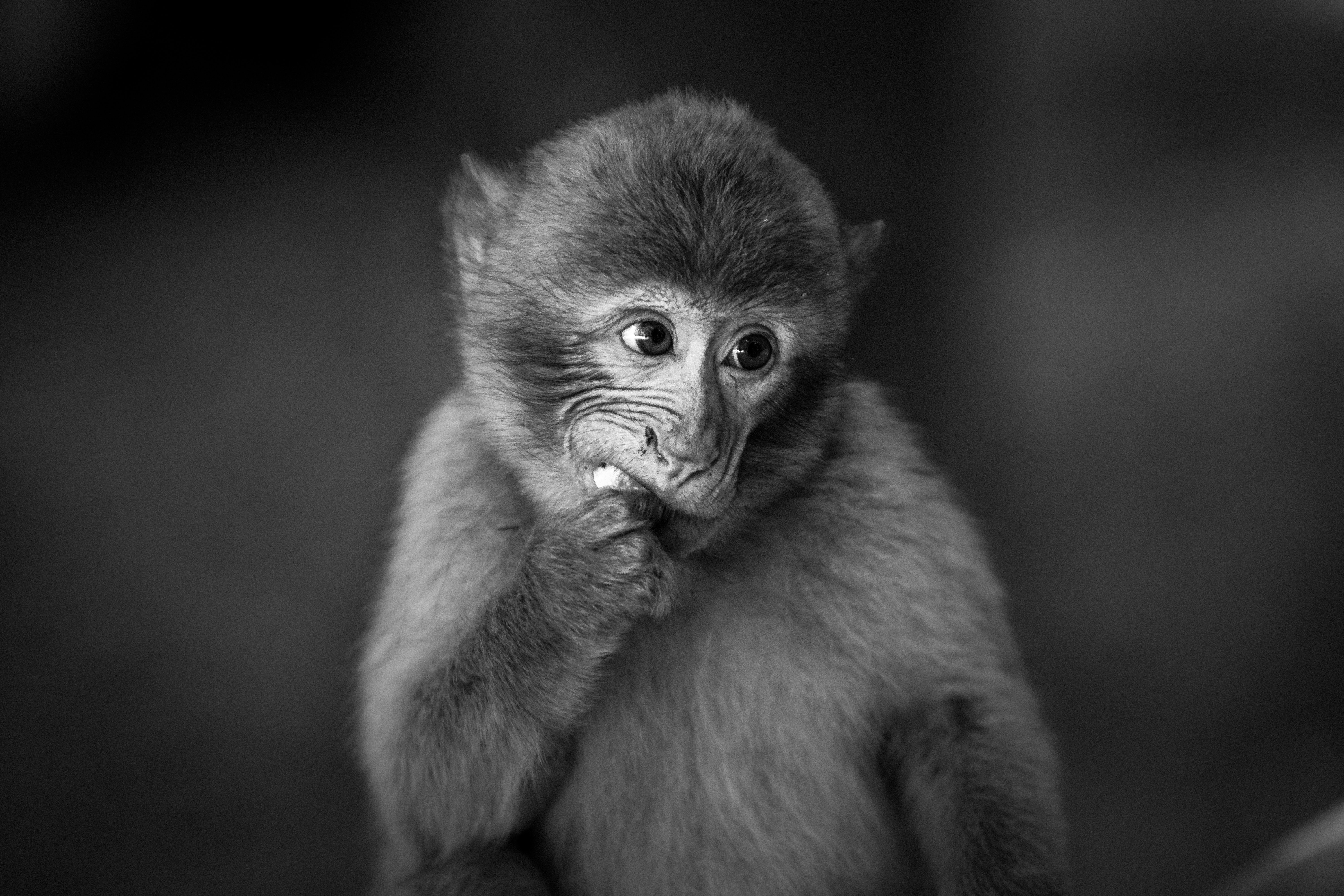 shallow focus photography of black monkey