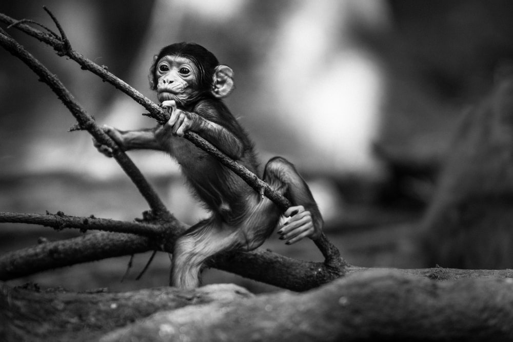 monkey holding branch of tree