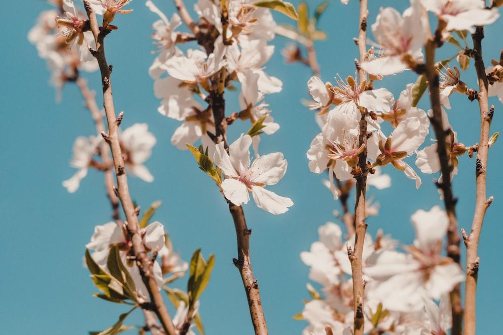 closeup photo white petaled flowers