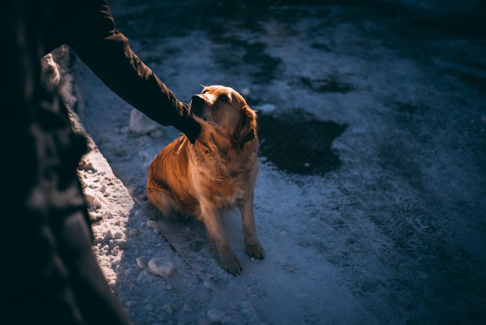 person holding tan dog sitting on rough white terrain's neck