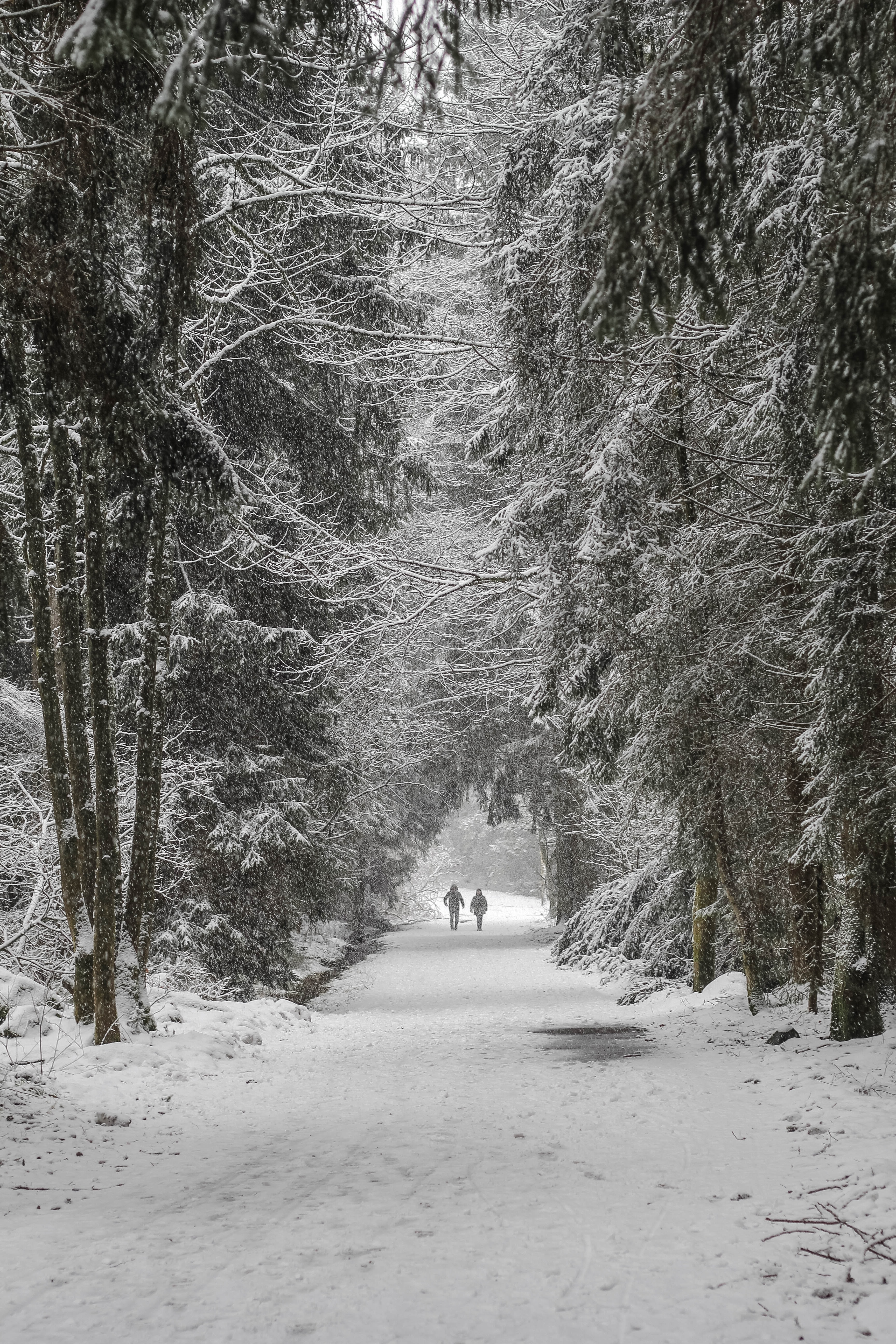 two person walking on snowfield surrounded by trees